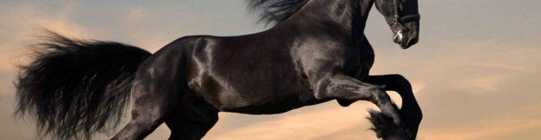 Физиология лошади