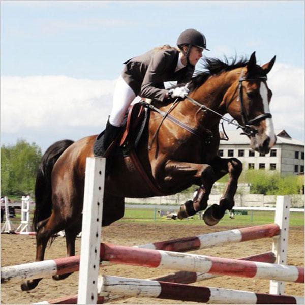 Особенности движения лошади