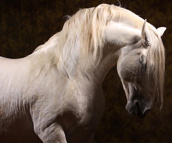 Влияние травм ЦНС на организм лошади