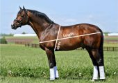 Части тела лошади, краткое описание