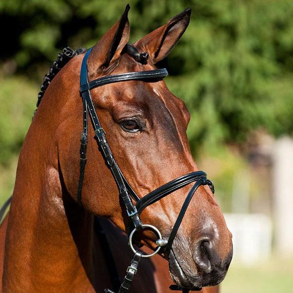 Строение уха лошади