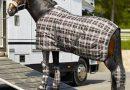 Дорожное снаряжение лошади