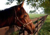 Клички и имена для лошадей кобыл