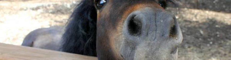 Артриты и их влияние на лошадей