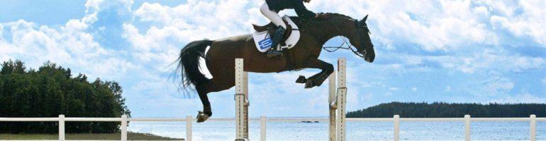 Различия в физической подготовке конкурной и выездковой лошади