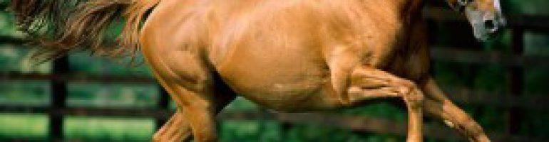 Лимфатическая система лошади
