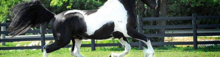 О двигательной координации лошади