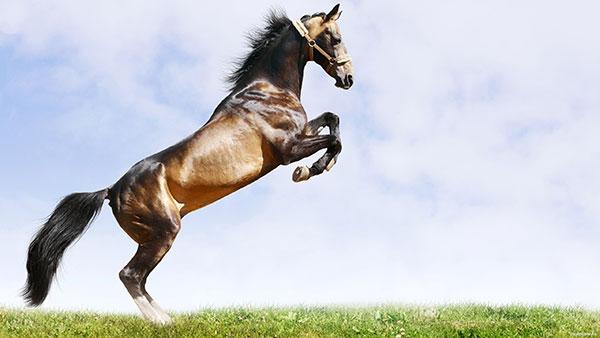 Цикличность прыжка