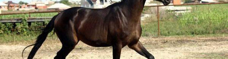 Ушиб подошвы лошади
