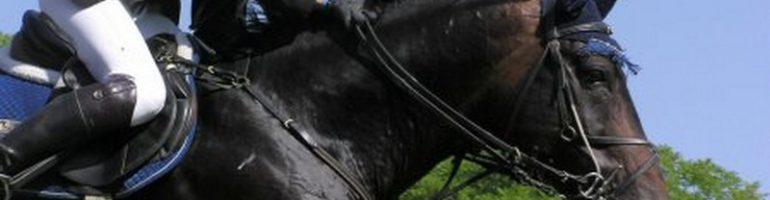 Как правильно выбрать экипировку для конного спорта