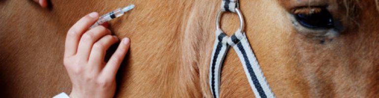Необходимые прививки для лошади