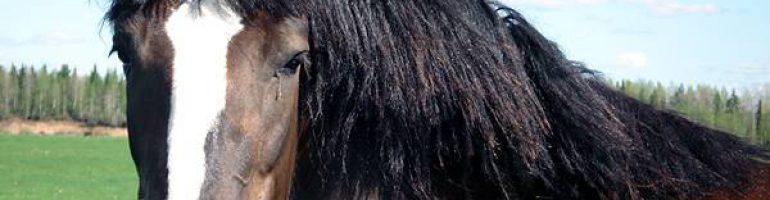 Влияние теплового удара на лошадей