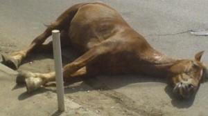 Пораженная электричеством лошадь