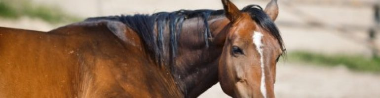 """Что такое """"дикое мясо"""" у лошадей и как с ним бороться?"""