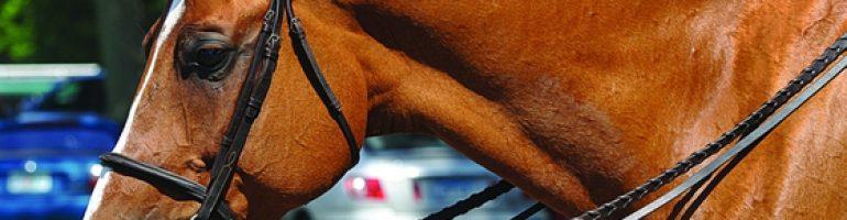 Капсуль для лошади