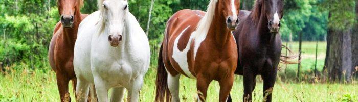 Сайт о лошадях и конном спорте