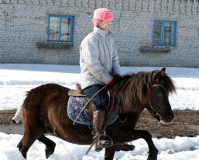 Фото лошади с забинтованым хвостом