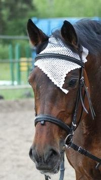 Шапочка для лошади - хороший способ проявить свою любовь