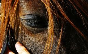 лошадь с закрытыми глазами