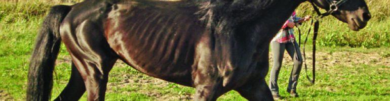 Легочная эмфизема лошадей