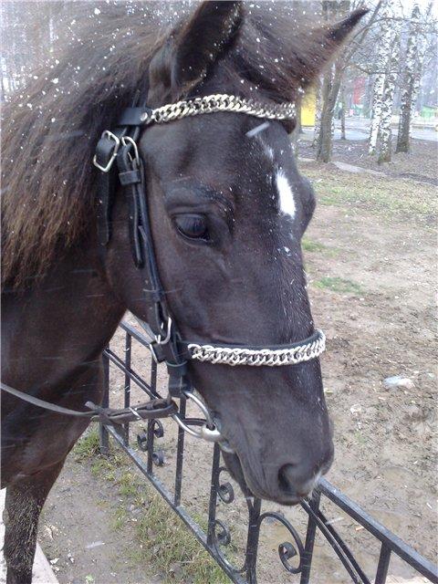 Функция капсуля не давать лошади открывать рот при управлении ею