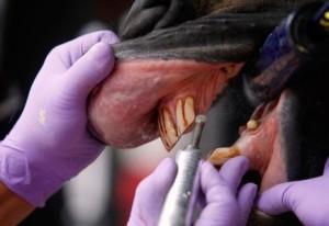 процесс проверки полости рта лошади
