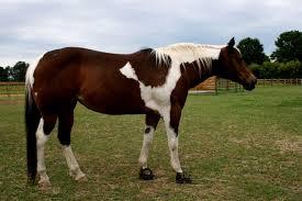 Лошадь пораженная артритом
