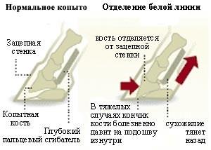наглядное описание ламинита
