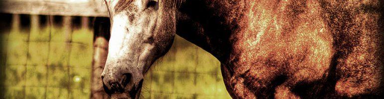 Желудочная язва у лошади