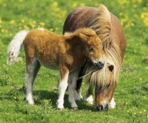 Лошадь жеребенок