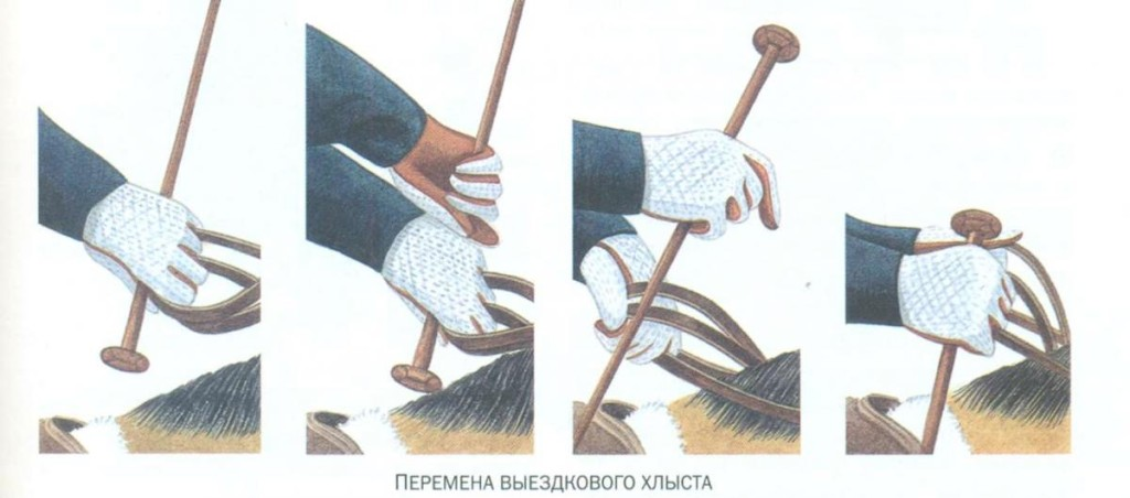 Ударять хлыстом допускаеться только по крупе или спине