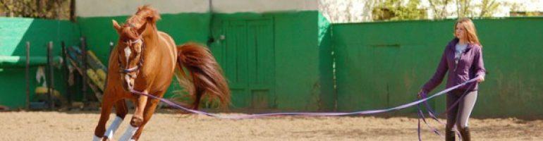 Отдельные элементы управления лошадью