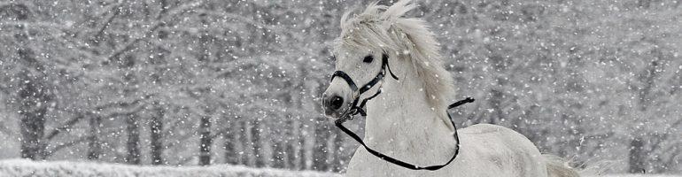 Зимнее снаряжение для лошади