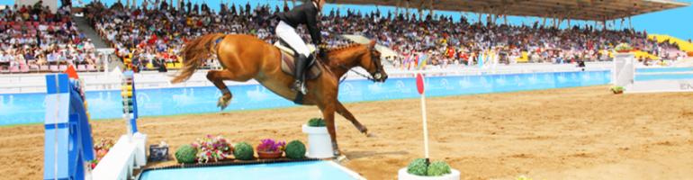 Два способа, чтобы обучить лошадь прыгать