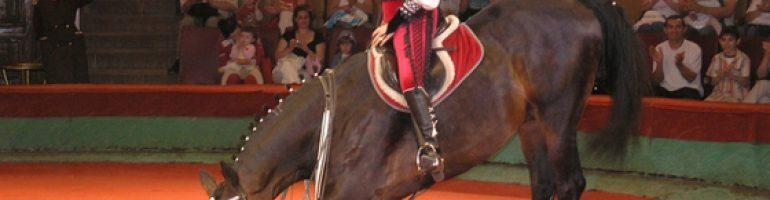 Как научить лошадь делать кранч: методы тренировки