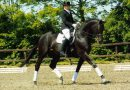 Как научить лошадь сбору пошагово