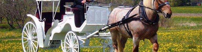Процесс изготовления разных видов телег для лошади