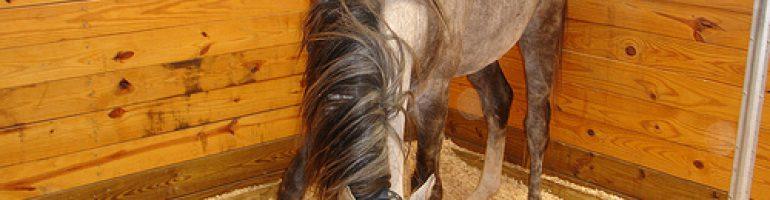 Идеальный вариант, как сделать подходящее стойло для лошади
