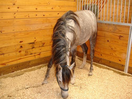 Как построить конюшню для лошадей на своем участке, инструкция видео