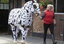 Как сделать различные виды попон для лошади