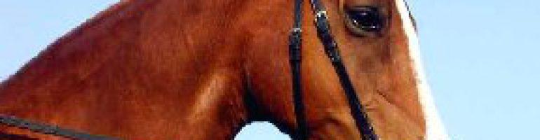 Как обуздать или одеть уздечку на лошадь