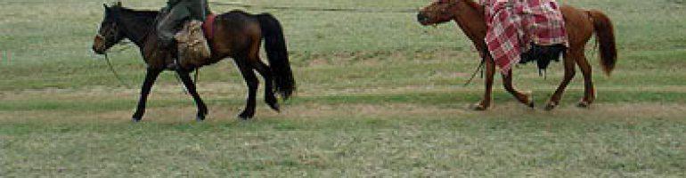 Как сделать поводок для лошади из различных материалов