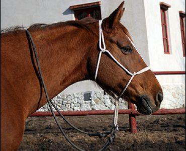 Как сделать уздечку для лошади без лишних затрат и долгих усилий?