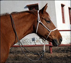 Как сделать недоуздок лошади 25