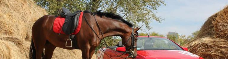 Последовательное изготовление седла для лошади