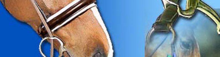 Разновидность и особенности трензелей для лошади