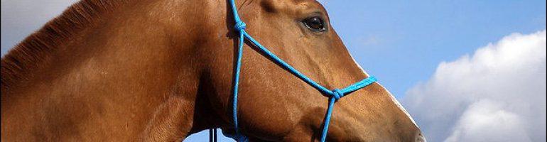 Изготовление многофункционального недоуздка для лошади
