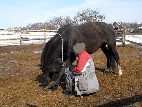 Обучение лошади переднему кранчу