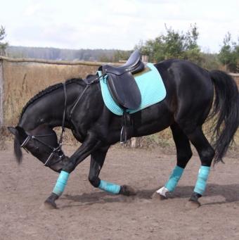 Как научить лошадь трюкам