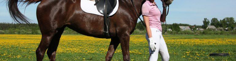 Обучение лошади простым командам